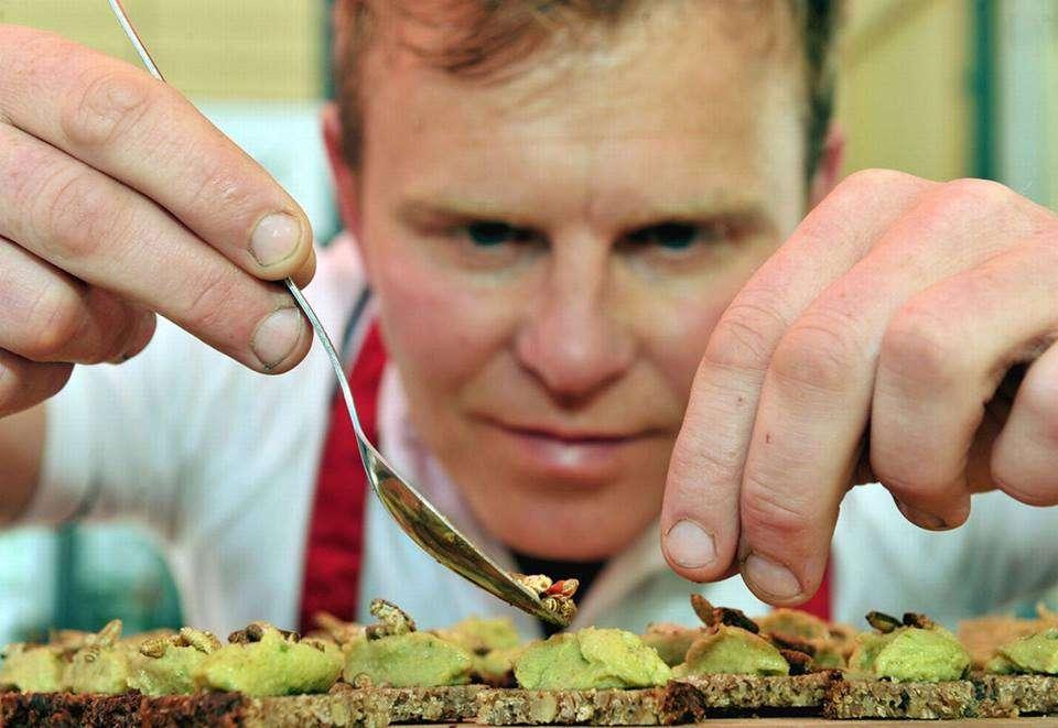 restaurant insecte 2