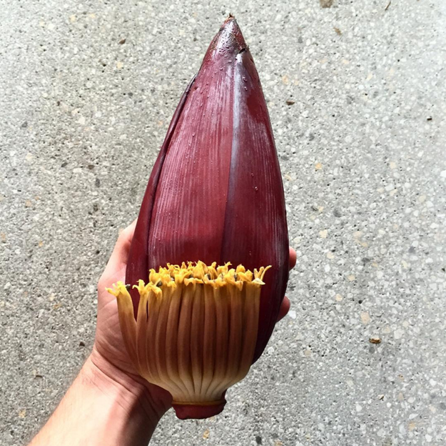 Floare de banana // sursa foto: Instagram