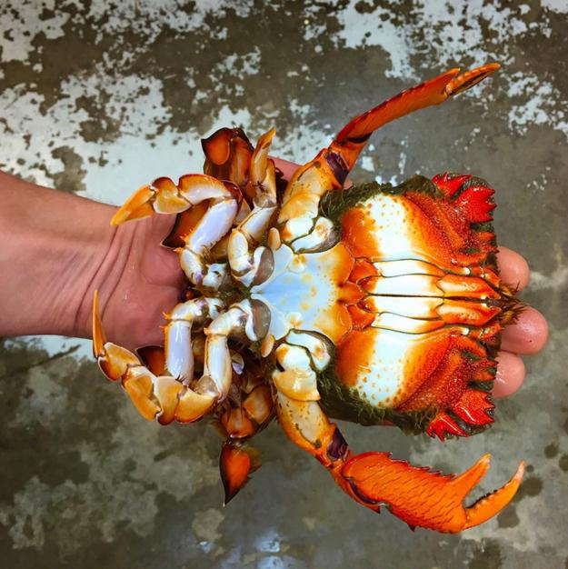 Crab // sursa foto: Instagram
