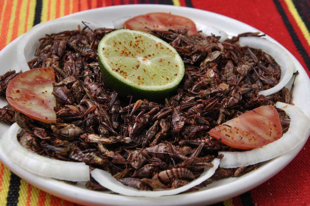 eating-insects